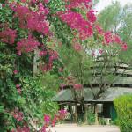 Complesso Turistico Bungalow Residence e Parco Pisacane